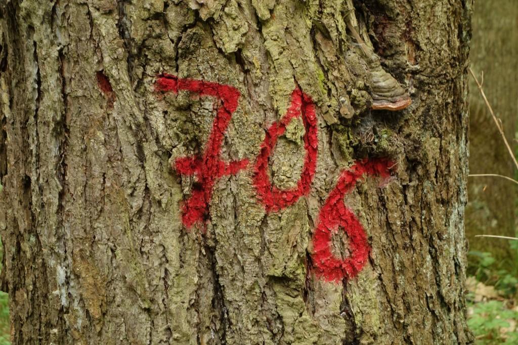 Un arbre numéroté pour conservation ou abattage (Pixabay photo par Michael Schwarzenberger)